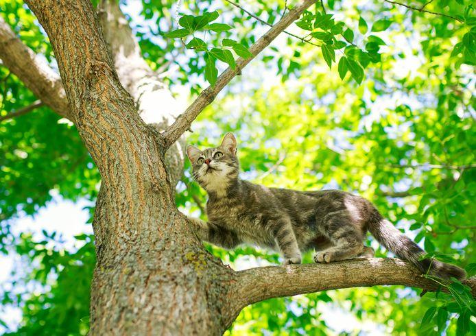Je poes of kat buiten laten lopen is illegaal. Dat betogen twee Tilburgse hoogleraren.