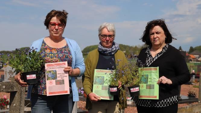 Burgerplatform 'Red Begraafplaats Vollezele' geeft bloemetjes om laatste moederdag te vieren