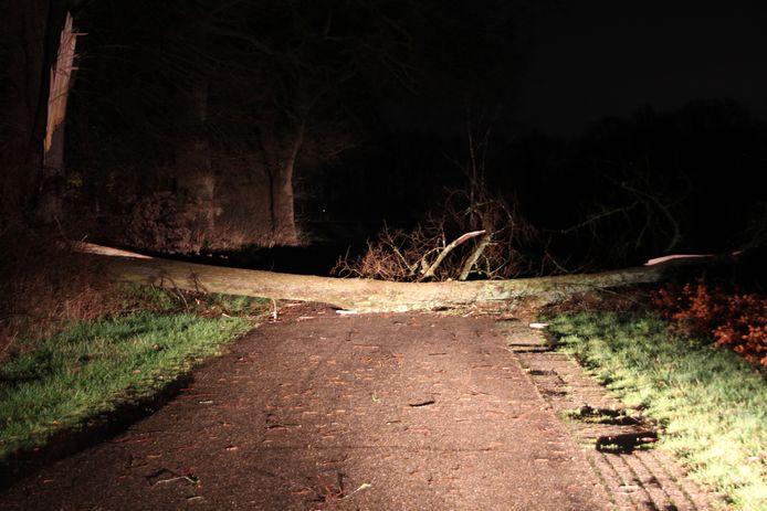 Een door midden gespleten boom blokkeert de weg in Rijssen.