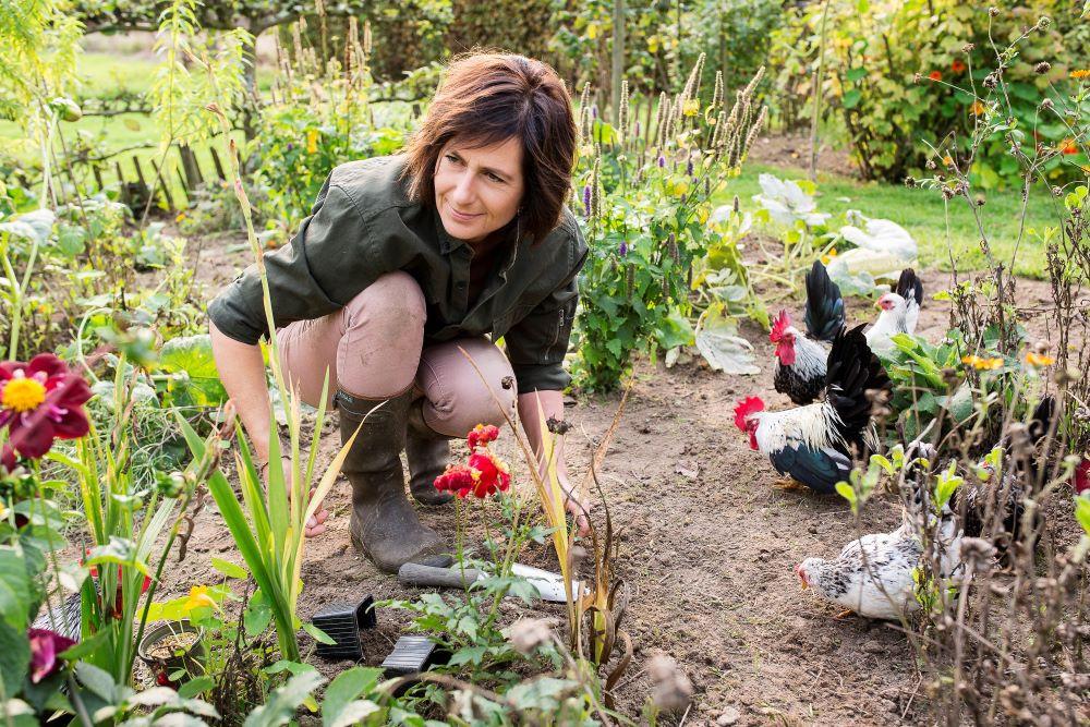 Kippen zijn niet alleen fijn gezelschap in de tuin, ze eten tot 50 kilo groen- en tuinafval per jaar en voorzien je van verse eitjes