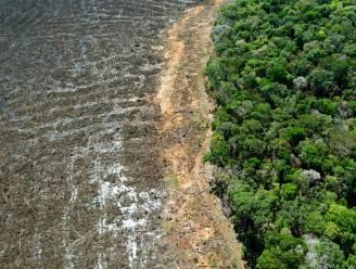 Bolsonaro belooft einde aan illegale ontbossing in Brazilië tegen 2030