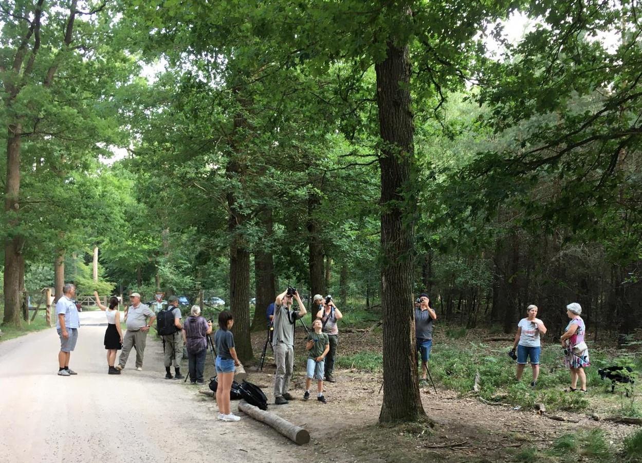 De boom trok in de vroege zomer liefhebbers van het vliegend hert, stelt Voss.