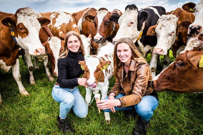 Eline en Roos Kroft laten een kalfje proeven van het verse boeren ijs uit hun nieuwe ijssalon.