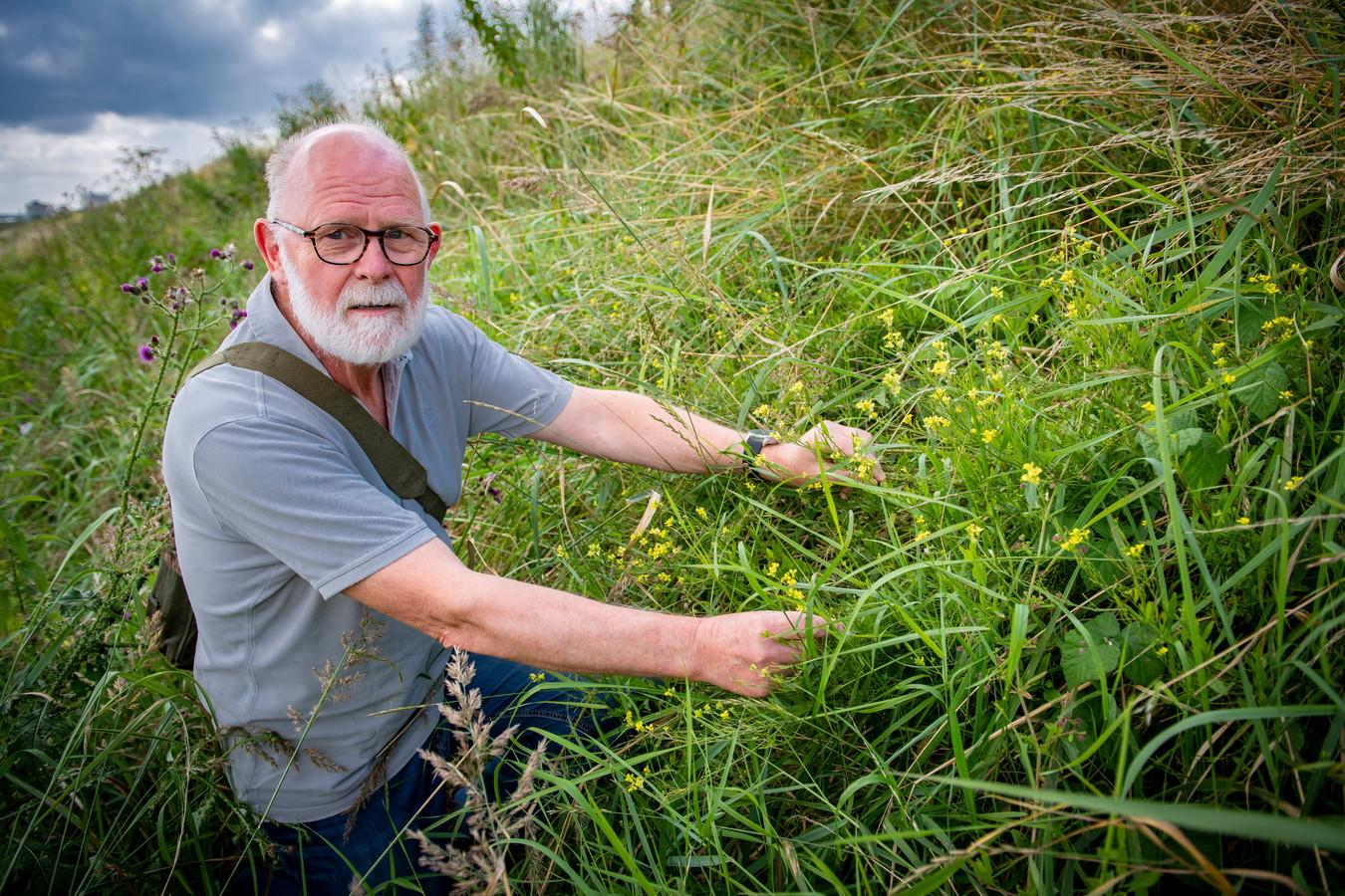Wiebe de Haan (69) bij de zeldzame plantensoort de 'Russische Raket', die hij twee weken geleden vond op een dijk in Zutphen.