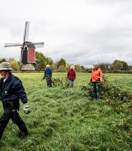 Eikenbosje geknot voor molen in Nederasselt