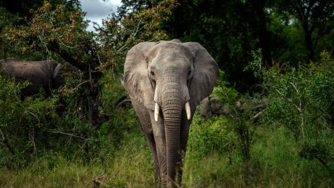 Olifant trapt stroper dood in Kruger National Park