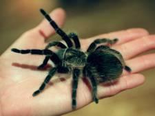 Ben jij bang voor giftige dieren? Ze zijn niet zo gevaarlijk als je denkt