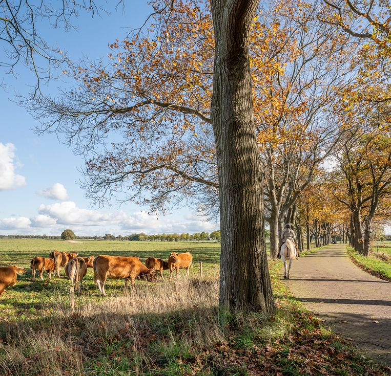 Biologische landbouw op een landgoed in Ansen, Drenthe. Volgens de Europese Commissie zou op een kwart van de Europese landbouwgrond biologisch moeten worden geboerd in 2030.  Beeld Harry Cock / de Volkskrant