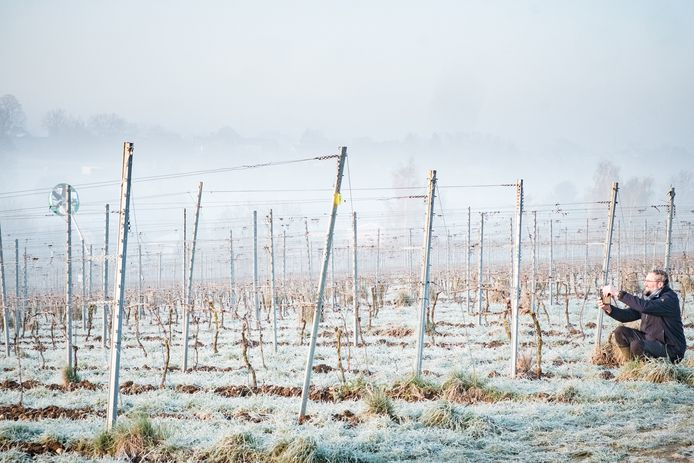 Pour lutter contre le gel des dernières semaines, le domaine viticole Vin de Liège utilise des tours à vent.