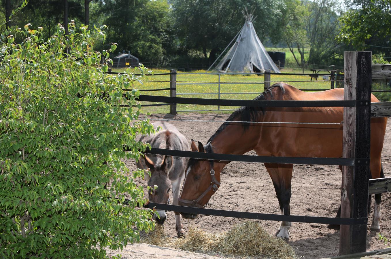 Op het terrein naast haar huis, met onder meer een tipi geeft Jeanny Rouwet 'natuurles' aan kinderen. Ook het verzorgen van de dieren hoort daarbij.