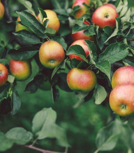 'Waarom staan de stadsparken niet vol met fruitbomen?'