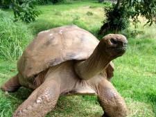 Schildpad Jonathan met 183 jaar de oudste van de wereld