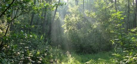 Utrechtse onderzoeker: 'Het regenwoud is helemaal niet ongerept, het is gewoon een tweedehands bos'