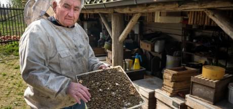 Massale dood bijen Boxtel kwam niet door landbouwgif, maar wat dan wel?