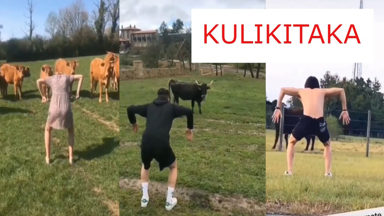 Een levensgevaarlijk spel op sociale media: koeien bang maken. Beeld TikTok