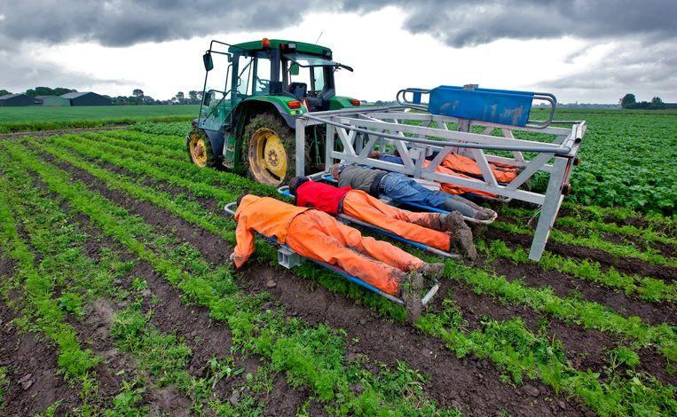 Onkruid wieden op een biologisch dynamisch akkerbouw- en tuinbedrijf in Noord-Holland. Beeld ANP