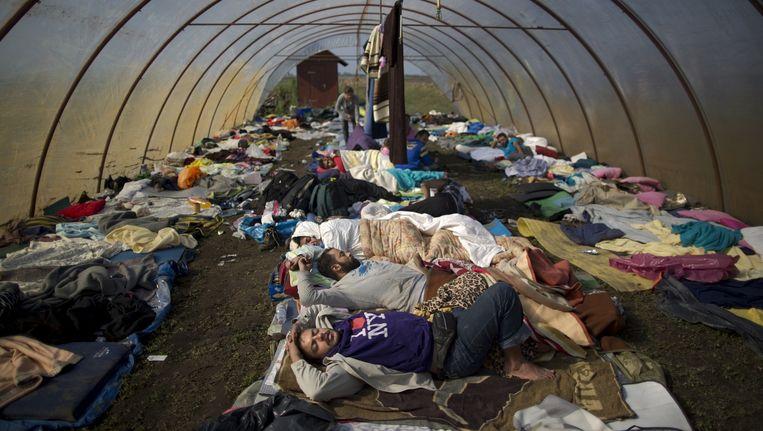 Vluchtelingen slapen in een broeikas in Hongarije Beeld AP