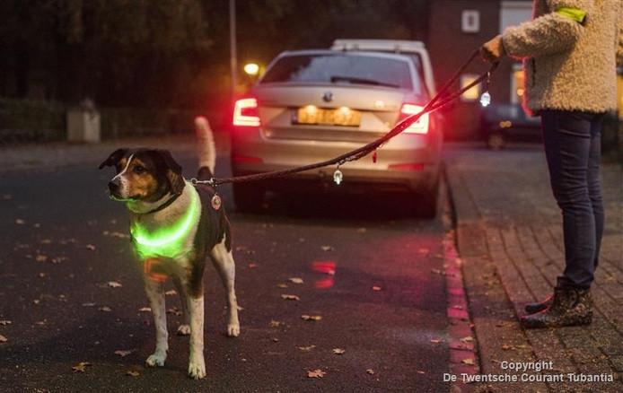 Maistro gaat netjes verlicht de straat op voor een wandeling.