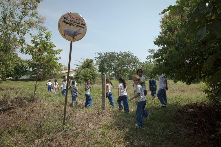 Kinderen passeren op weg naar school een waarschuwingsbord voor de nijlpaarden bij het Hacienda Nápoles Park in Colombia, in februari. Beeld AP