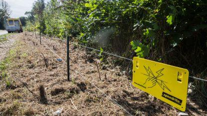 Extra maatregelen tegen everzwijnenplaag