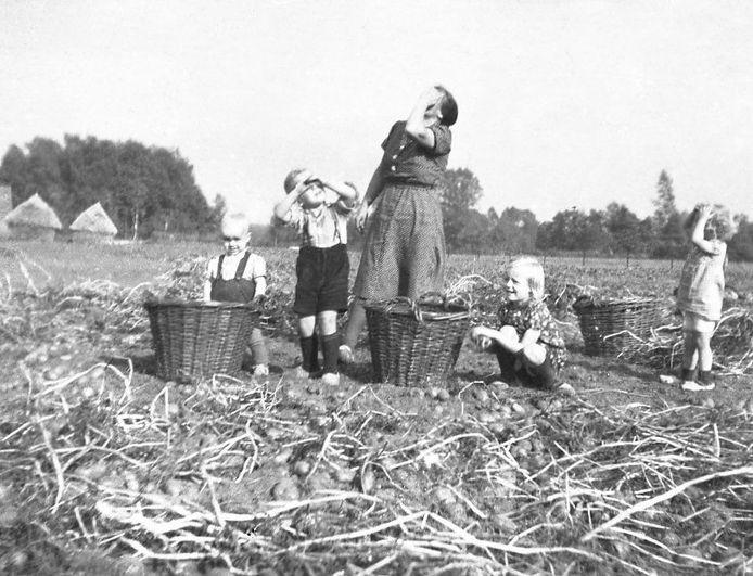 Dina Geurink in Lichtenvoorde met haar kinderen bezig met de aardappeloogst, herfst 1944. Het is de tijd dat constant zwermen geallieerde jachtbommenwerpers overvliegen richting Duitsland.