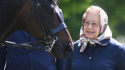 Queen Elizabeth zoekt een paardenverzorger (en die kan 25.000 euro per jaar verdienen)