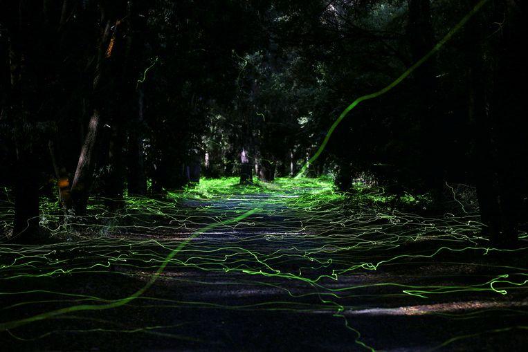 Vuurvliegjes lichten op in een bos in Temuco, Chili. Beeld REUTERS