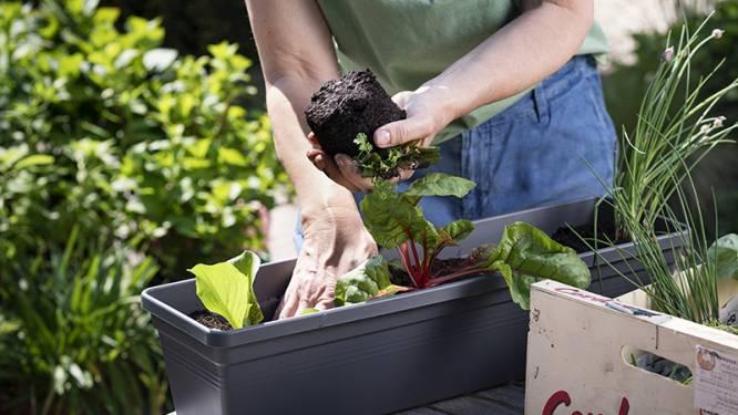 #MeiseKookt gaat voor sharing van zelf geteelde kruiden, groenten, fruit, noten,...