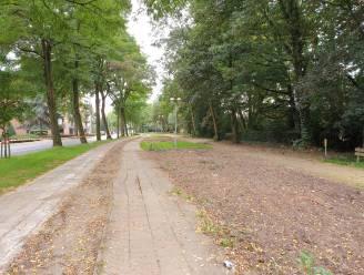 Beuken en acacia's langs de Gravendreef worden niet gerooid bij werken aan nieuw fietspad