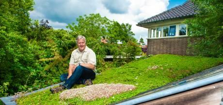 Groene én blauwe daken zijn razend populair: 'Ik heb altijd een stukje natuur bij de hand'