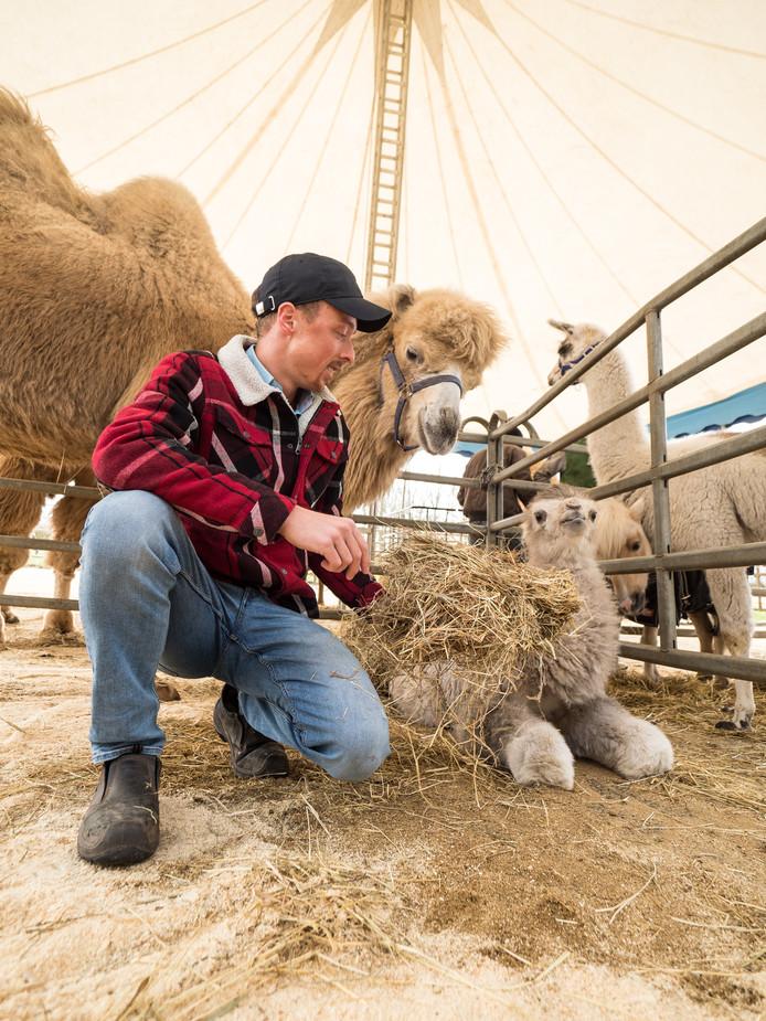 Kevin van Geet met kamelen Yasmin en Tobias.