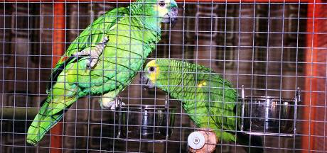 Fors meer mensen besmet met papegaaienziekte