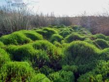 Stikstof treft álle natuur in Oost-Nederland