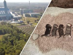 Gemist? Lot Twence in handen van rechter & woede om doodgeslagen kittens in Hengelo