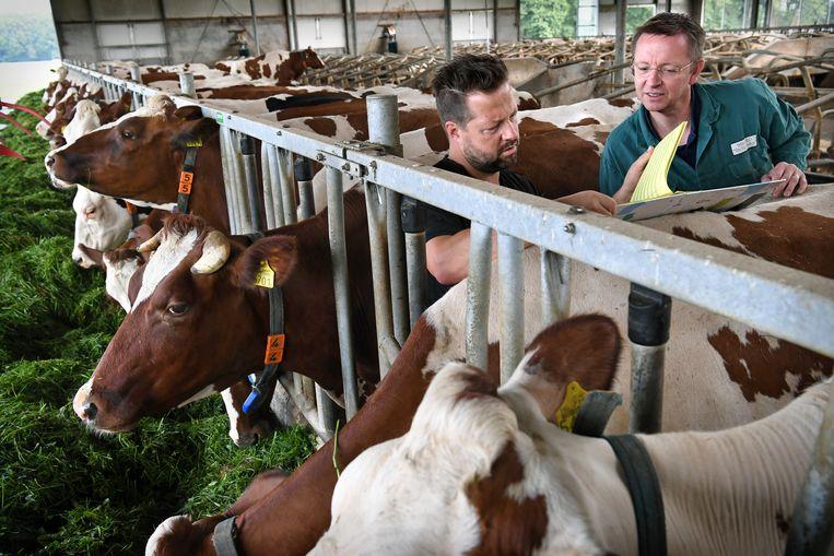 Kloosterboer en Niks tussen de koeien. Beeld Marcel van den Bergh / Volkskrant