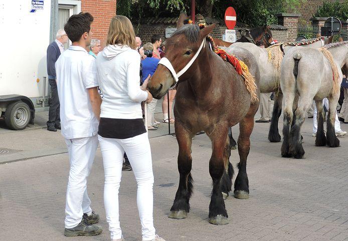 De paardenprijskamp in Landegem.