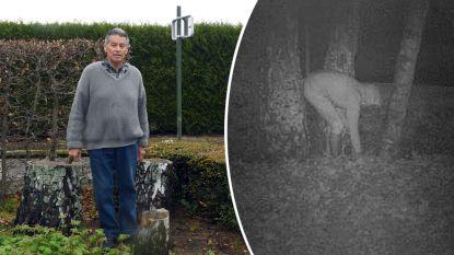 Vrouw (64) boort gaatjes in bomen van overburen en kiepert er benzine in
