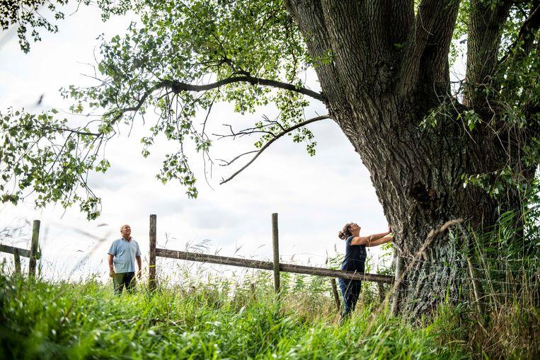 Dick Schipper en Arianne Koster bij de meer dan tweehonderd jaar oude grensboom. Beeld Foto Boaz Timmermans