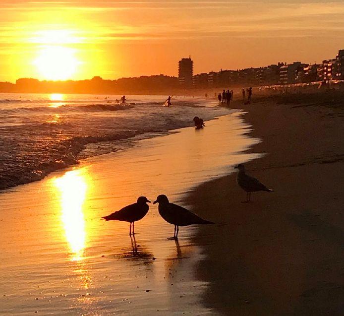 VERLIEFD - Deze meeuwen hebben een romantische ontmoeting op het strand in La Baule in Frankrijk tijdens de zonsondergang.