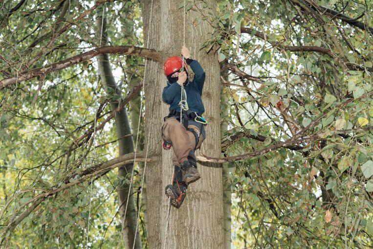 Een deel van de activisten maakt een kamp in de bomen. Beeld Illias Teirlinck