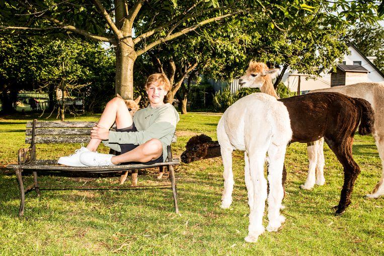 Alpaca's van Silvia (44), Reinier (48), Ties (16) en, op de foto, Huub (13) de Haar. Beeld Jan Mulders