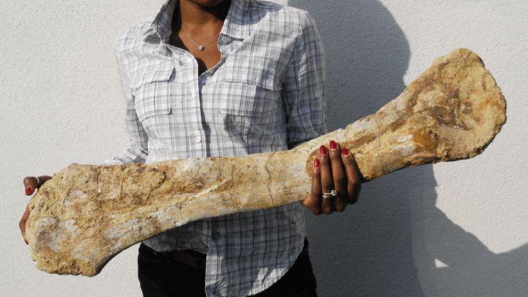 Bot van een Spinosaurus. Beeld Catawiki