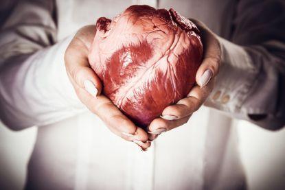Volgens pionier van de harttransplantatie is varkenshart over drie jaar klaar voor de mens