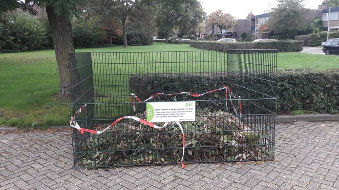 Bladkorf in Nijmegen.
