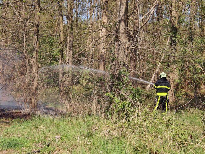 Bosbrandje in Steenbergen