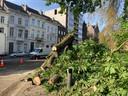 De tak belandde op de weg langs de Hofbouwlaan