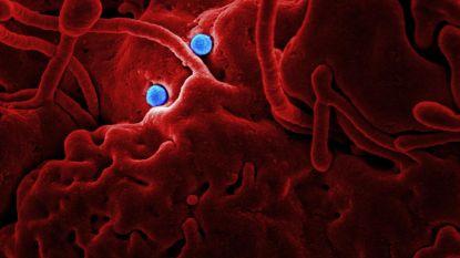 """Deze 4 andere dodelijke ziektes riep WHO ook uit tot """"globale noodsituaties"""""""