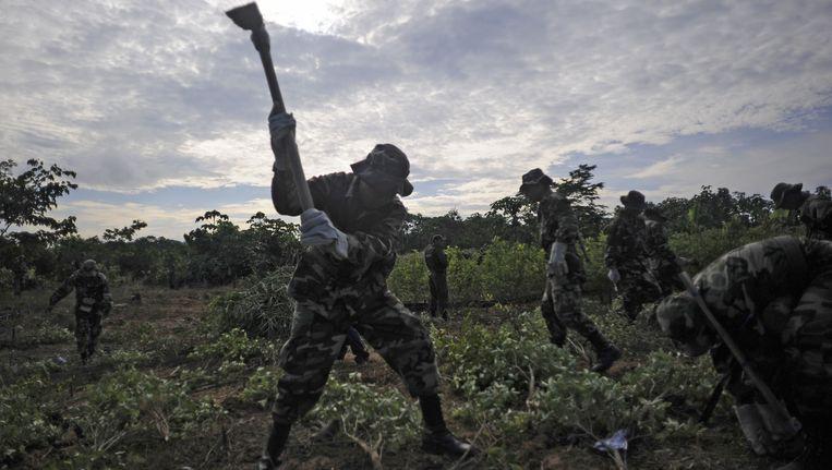 Leden van een gecombineerd team van politie en leger vernietigen een cocaoogst in Chimore, Bolivia. Beeld AFP