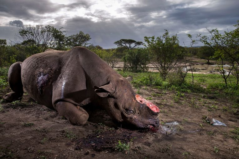 null Beeld Wildlife Photographer of the Year