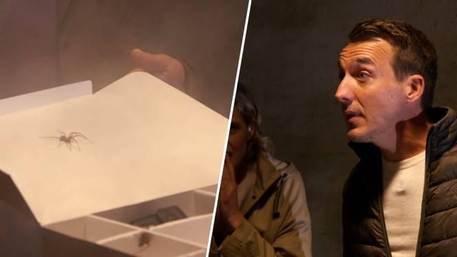 Werkt hypnose echt? Andy Peelman probeert van z'n spinnenfobie af te raken in 'Ze Zeggen Dat'